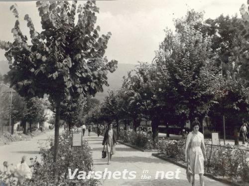 Вършец - Алеята с липите в центъра 1967 - Вършец