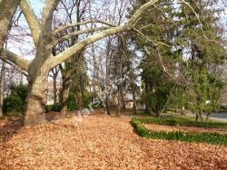 Есен във Вършец - Парка при Баните - Вършец