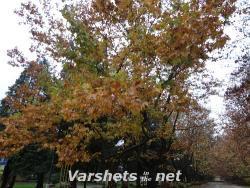 Есен 2014 - Вършец - Вършец